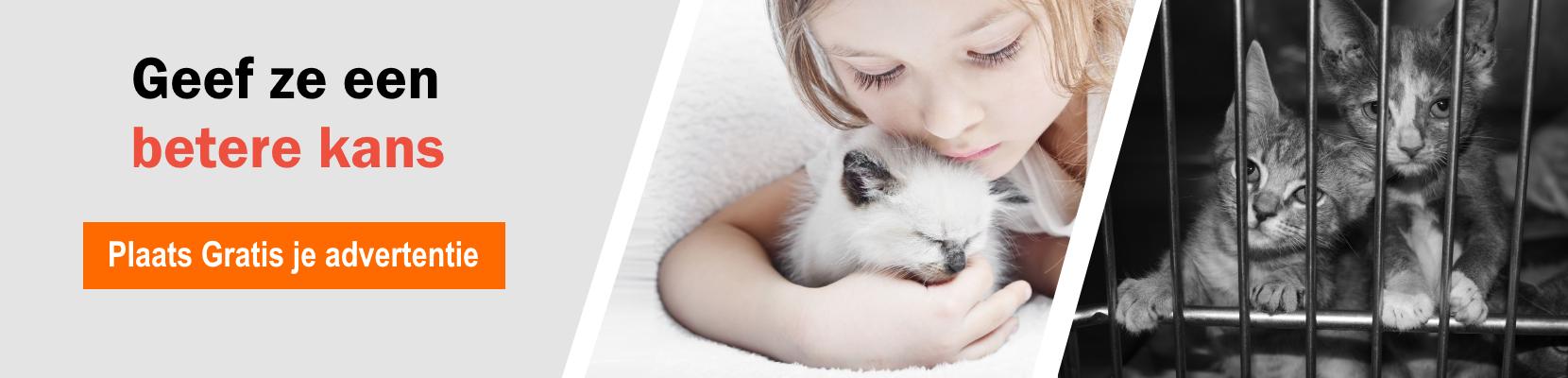 SL2_Gratis Kittens.png